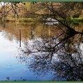 Reflets arbres et voilier au Lac