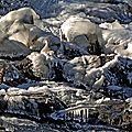 Sculpture sur glace.