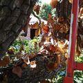 Parc des platanes kaki3