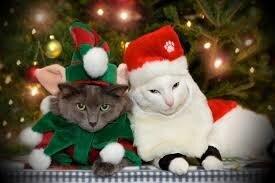 Les Chats chantent Noël - Sonnerie Mobile Gratuite   Animaux de noël, Chats de noël, Photo drole animaux