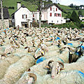 Lourdios-Ichère, transhumance, troupeaux sur place