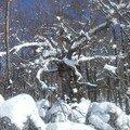 Gréo 8 : l'arbre aux sorcières