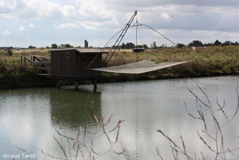 002036 Noirmoutier Juin 2020 - Les Marais Bretons Vendéens - Pêcheries du Grand Pont