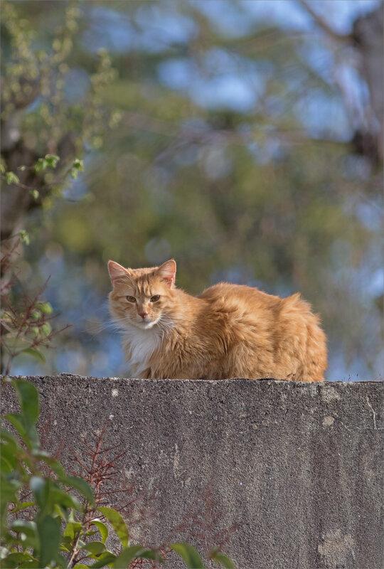 ville chat roux soleil 010418