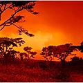Lettre à l'afrique