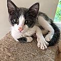Kikodo adopté à Sauv et Chats en détresse