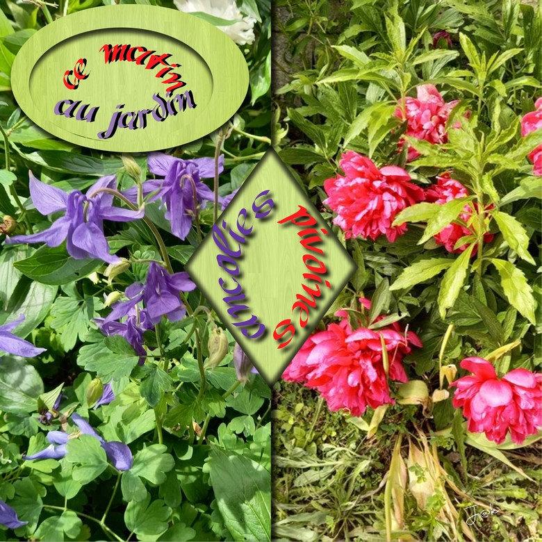 ancolies pivoines au jardin _24-05-21