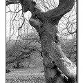 L'arbre-singe