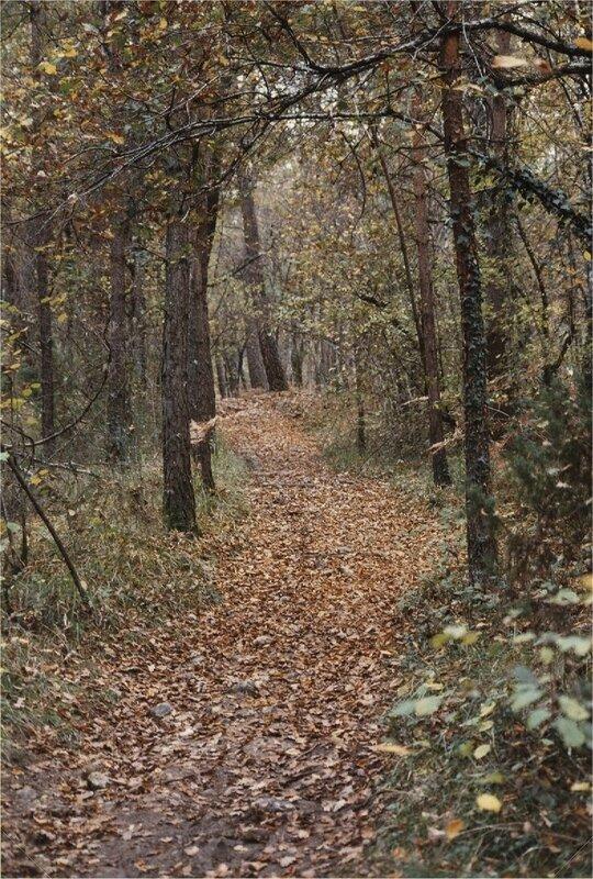 chemin du clédier à foncrose en automne