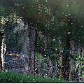 Dans la forêt magique les couleurs déambulent