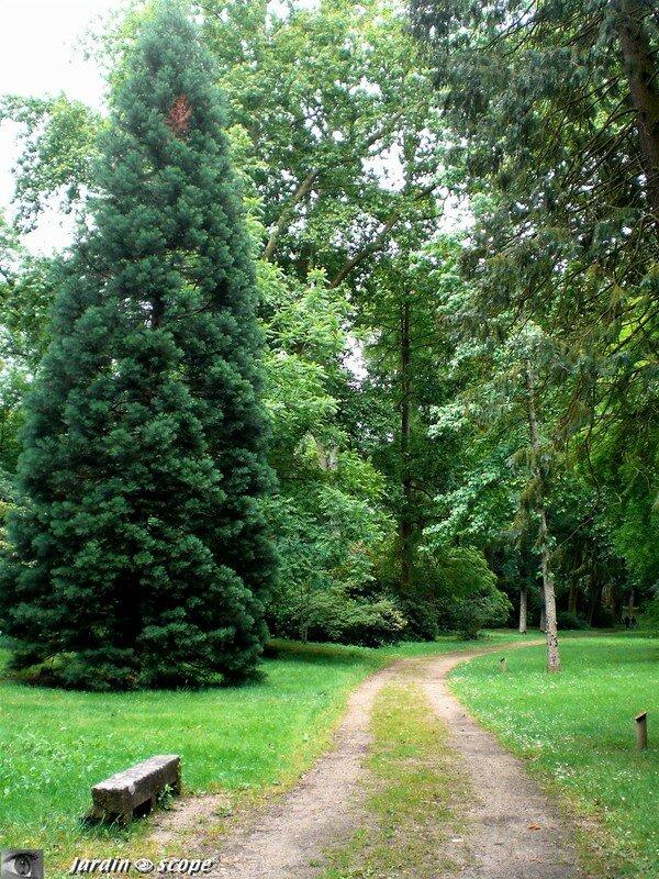 Promenade à l'arboretum de Châteauneuf sur Loire (45)