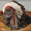 plume sioux amandine