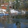 Le coin des flamants roses sous la neige