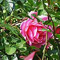 Fleurs de Léon 050518