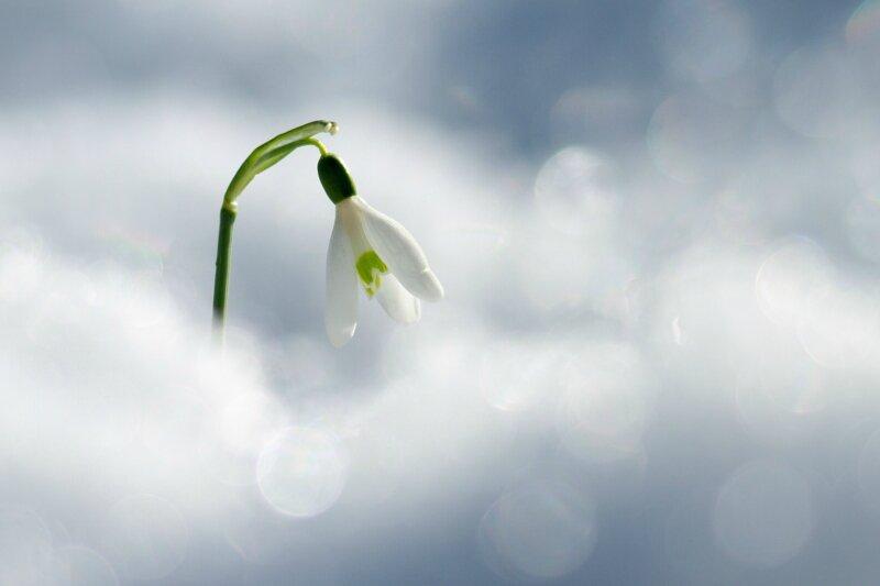 Comme une idée du printemps...