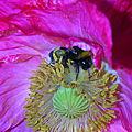 Ivres de couleurs et de pollen....