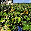 Cabanon-vignes