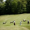 Golf et écologie