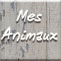 icone album animaux