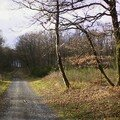 Nouzonville la forêt de Mellier Fontaine
