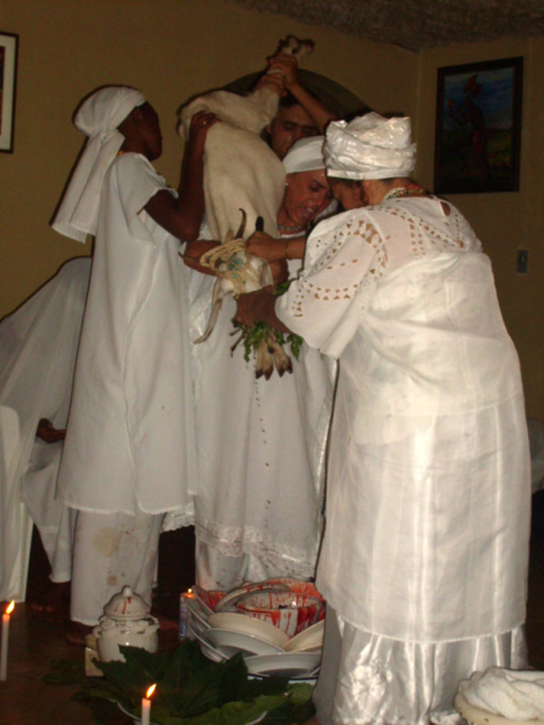 White-nanny-goat-being-sacrificed-in-Obatalas-honor