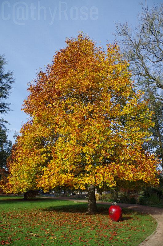 7-octobre automne