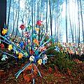 Sculptures sylvestres
