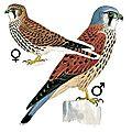 Oiseaux des chartrons