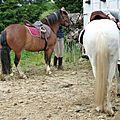 balade equestre gastronomique à La Lucerne d'Outremer (6)