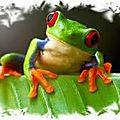 Les grenouilles et la jatte de crème