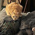 blog le chat roux