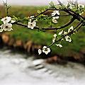 Les quatre saisons : le printemps (1)