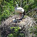 ♥ le parc des oiseaux à villars-les-dombes (5) ♥