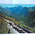 Alpes de haute Provence la transhumance