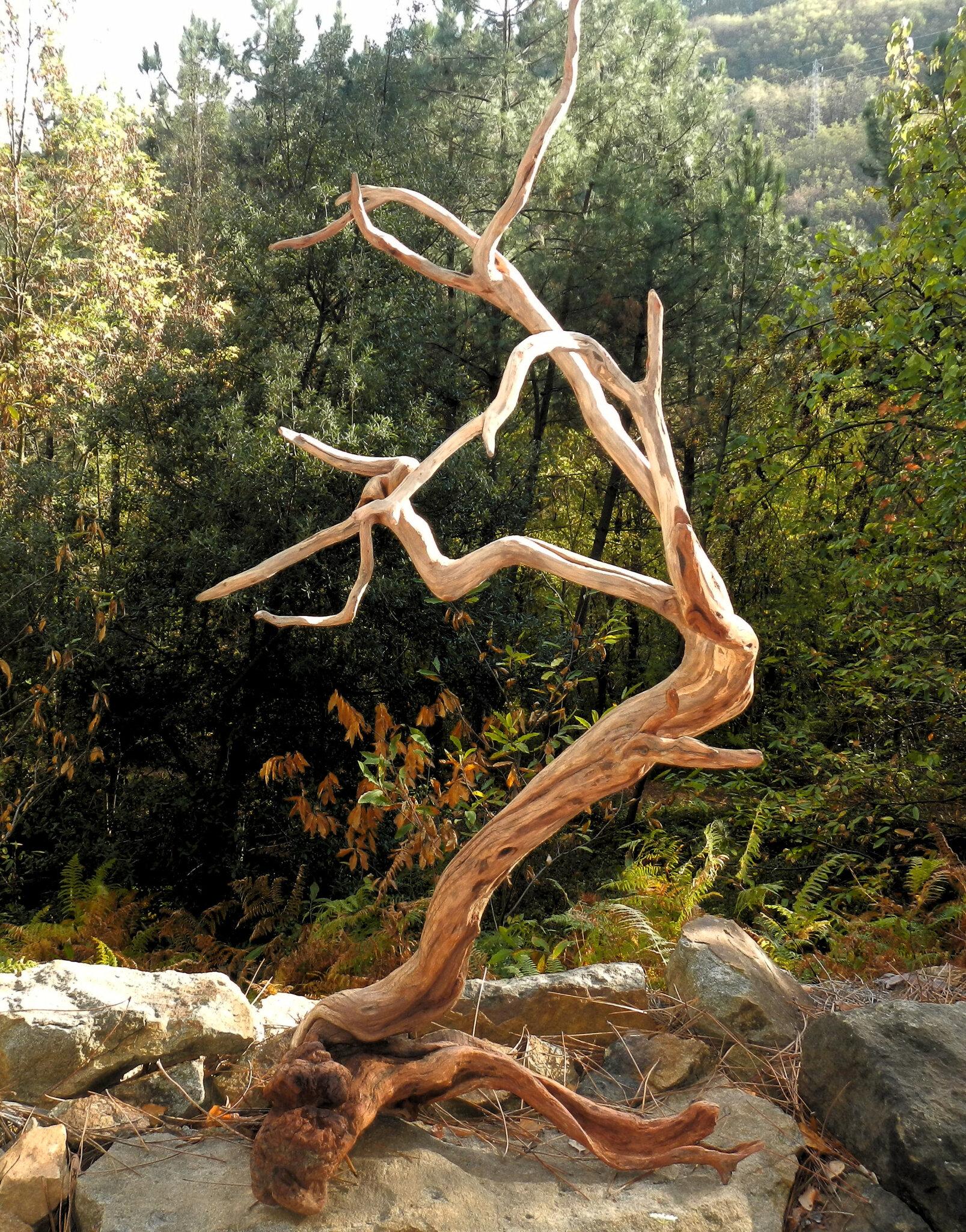 souche de bruyère arborescente bien travaillée yurtao