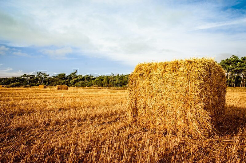 7509926-straw-bale-in-countryside-landscape