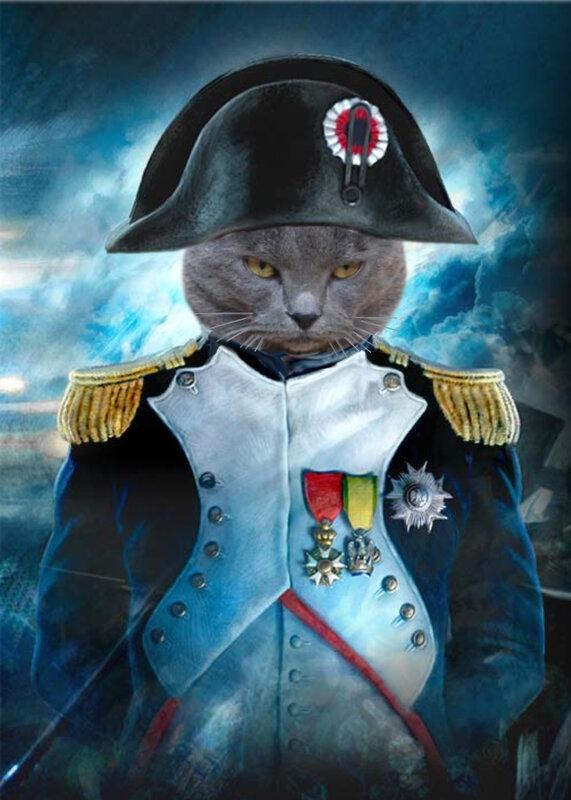 chat napoleon