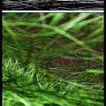 vert fibreux pour peindre