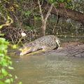 Notre copine le crocodile enceinte