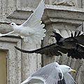 Les colombes, la mouette et le corbeau au vatican !