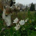 Jean-claude cesar seul au jardin