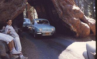 6209-YosemiteTunnelTree