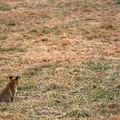 Le territoire des renards - 2ème partie