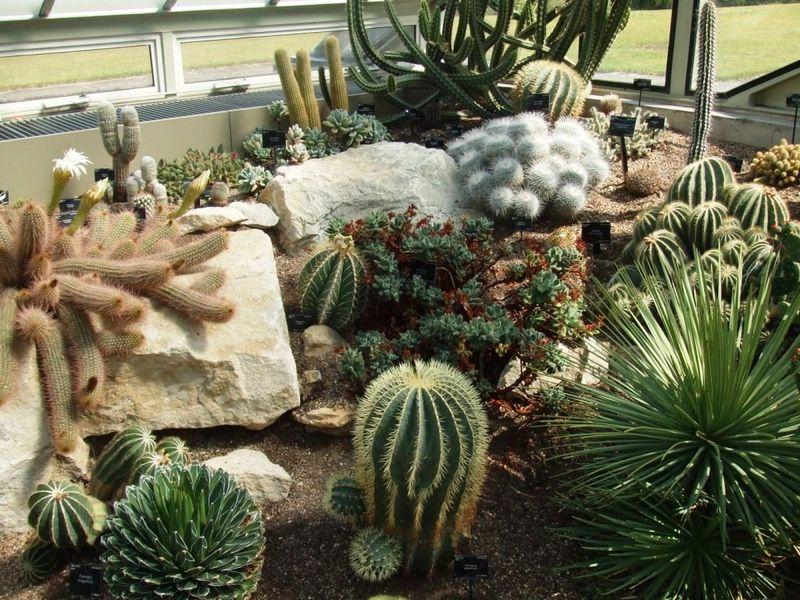cactus 1