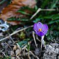 fleurIMG_9960