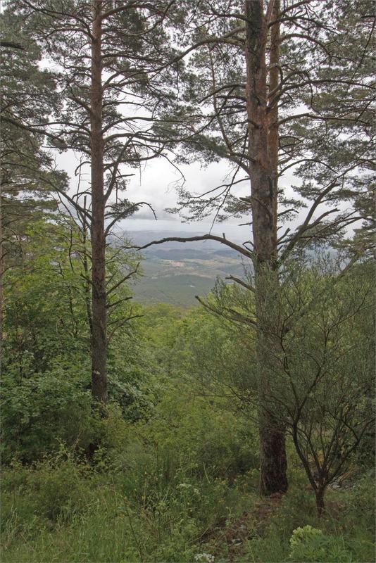 2 Aragon Moncayo Tarazona 110619 GA 50 ym 31 arbres vue plaine pluie