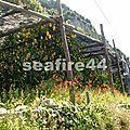 2012_05260237_pergola de citronier en direction du village de pontone
