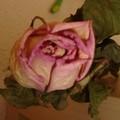L'univers de Rose