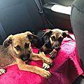 Lila et Nala - 2 chiots sauvés par des touristes qui les adoptent