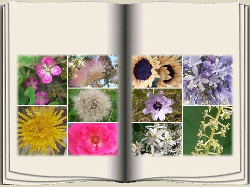 Fleurs Lylou (18)